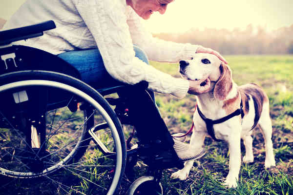 woman-in-wheelchair-caressing-a-dog