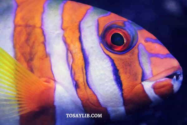 clown fish light reflection on it