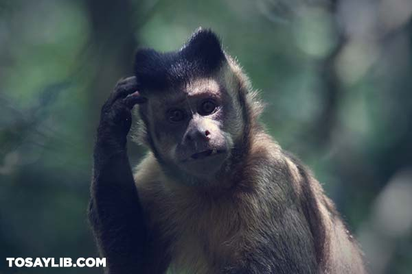 28 Picture of a monkey scratching head