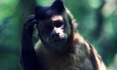 Feature-Picture-of-a-monkey-scratching-head