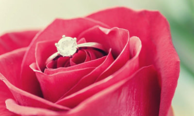feature-silver-diamond-embed-ring-on-red-rose