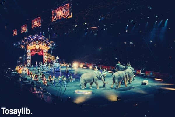 gray elephants people performing on circus