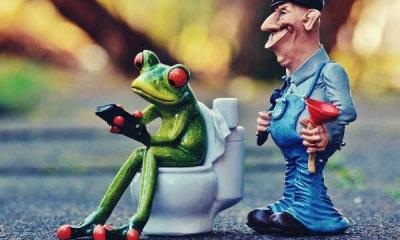 feature-plumber-frog-loo-pîmpel-repair
