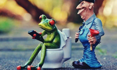feature-plumber-frog-loo-pîmpel-repair