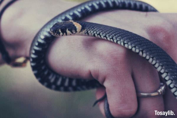 forest snake hand