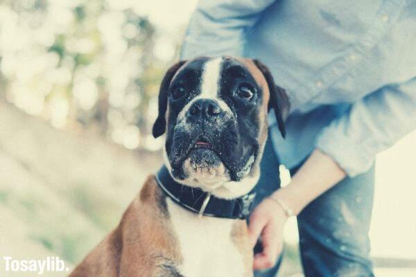 dog is a human s friend