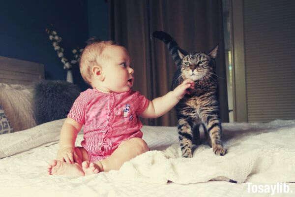 baby vs baby_cat