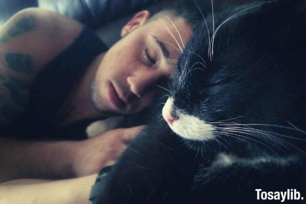 cat sleeping kitten boy man asleep sleep tender