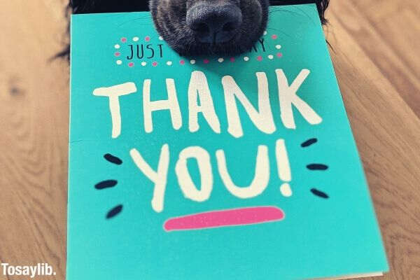dog biting blue thank you card