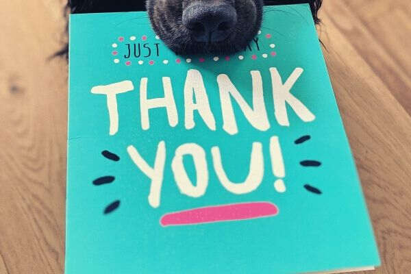 dog-biting-blue-thank-you-card