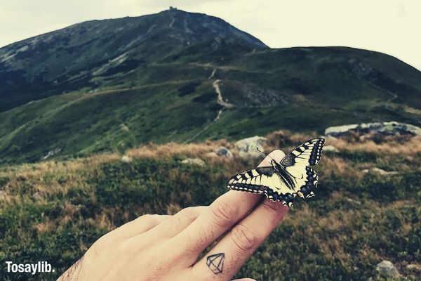 hand butterfly hill sky