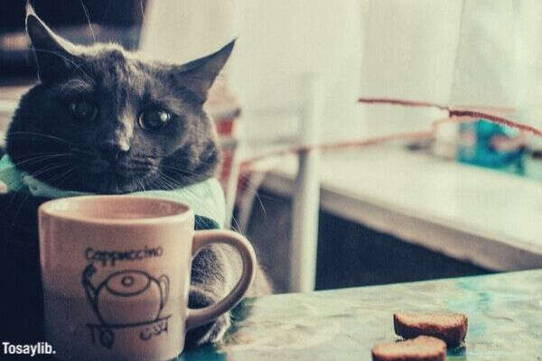 cat coffee tea tea home lovely cats comfort cosiness hot cocoa