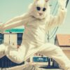feature-mascot-rabbit-jumping-sky