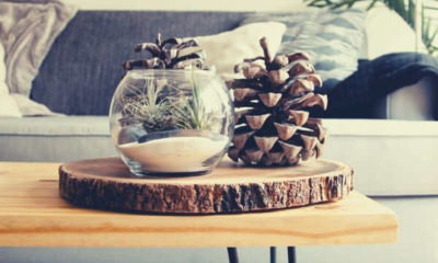 clear-fishbowl-beside-green-pine-cone-on-wooden-table