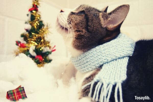 a cat playing a muffler with a christmas tree