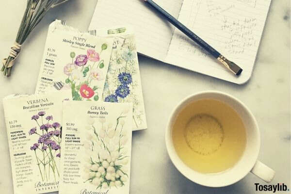 planning a garden in spring with seed packets and tea