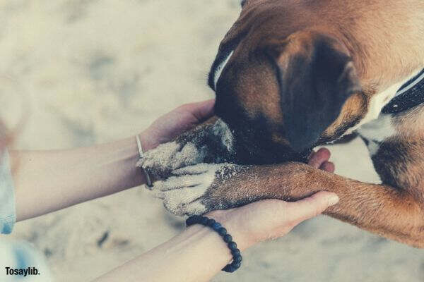 dogs cute pows in hands sand