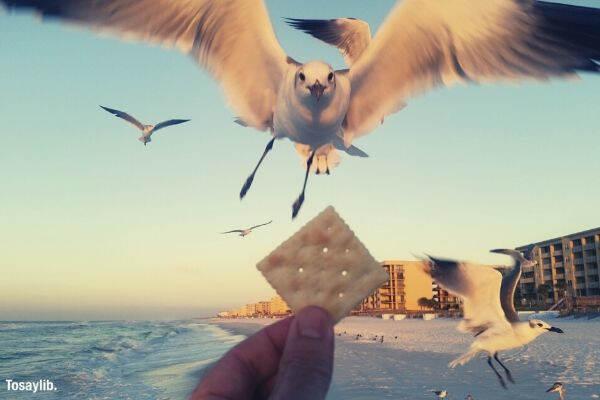 person holding cracker feeding bird sky building