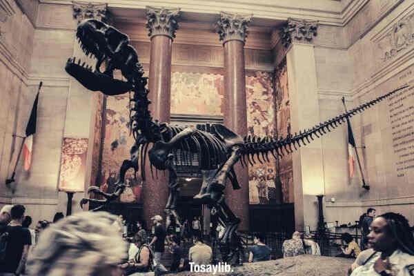 trex skeleton bones museum