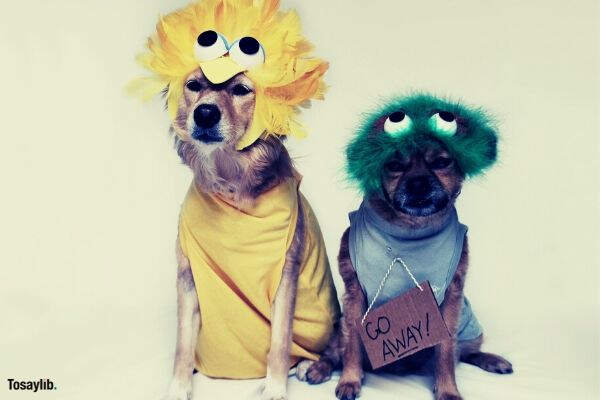 dogs wearing yellow green costumes