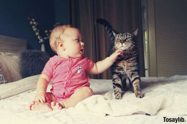baby in pink touching a cat