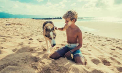 wallpaper-animal-beach-boy