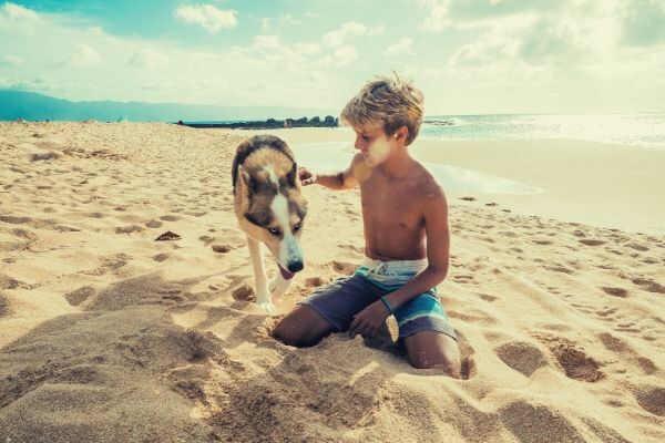 wallpaper-animal-beach-boy