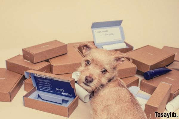 brown wooden boxes and a dog