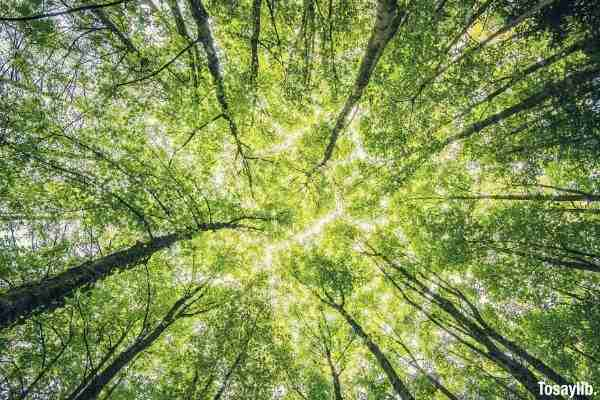 worms eyeview of green trees sunlight