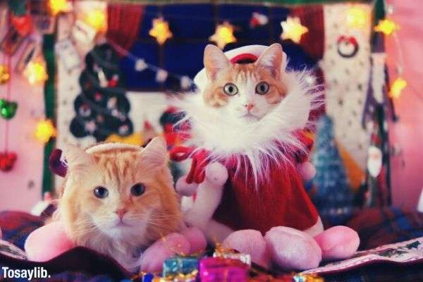 two cats wearing costume santa claus and reindeer