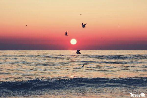 birds flying on top of the sea during sunset waves