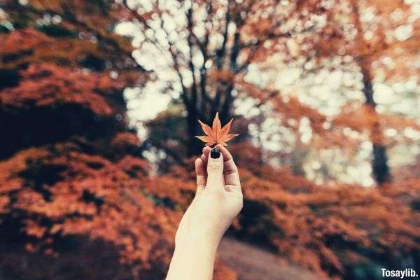 woman holding brown 7 hand leaf bokeh focus brown trees background