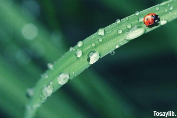 bug insect spring dew leaf