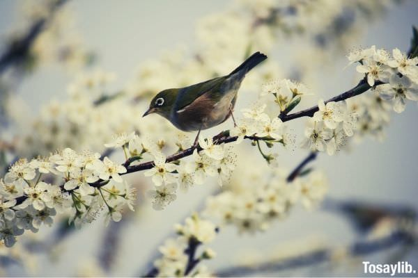 green and white bird standing on branch with white flower