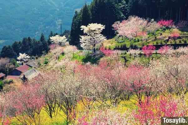 mountain assorted colored flower field