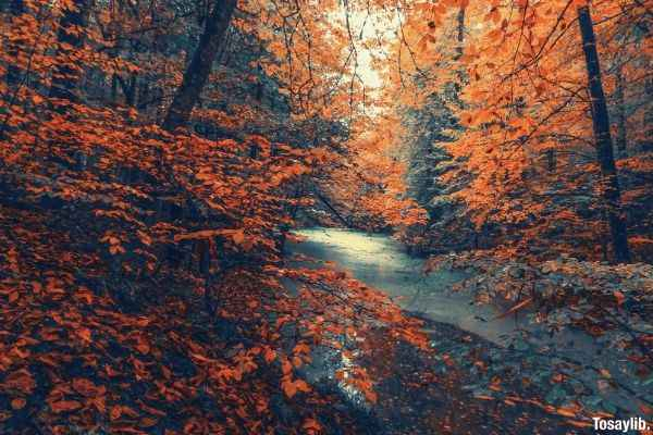 river between orange leaves body of water forest like