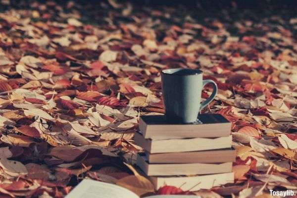 gray mug on top of piled books in the middle of dried leaves