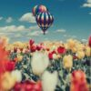 white-red-and-yellow-tulip-flowers-hot-air-balloons