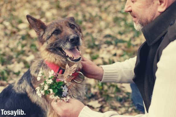 old man in beige sweater with vest petting his german shepperd with red leash