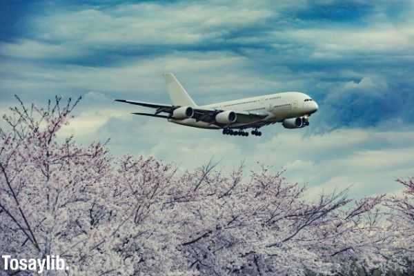 airplane flying above cherry blossoms at Narita airport