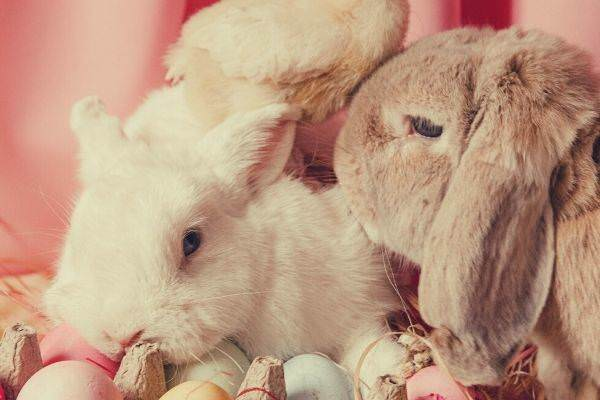 bunny-and-eggs-with-pink-background-easter-instagram-captions