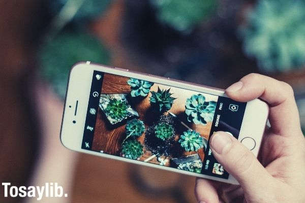 Person holding iphone capturing image of the plant