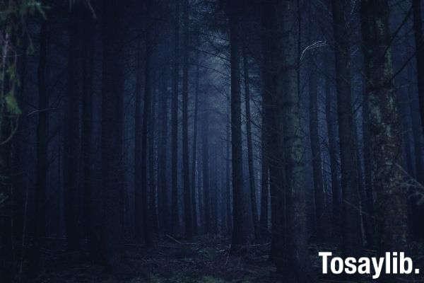 dark forest photo tall trees