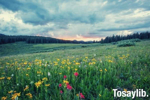Photo of greenfields with yellow and red flowers at daytime