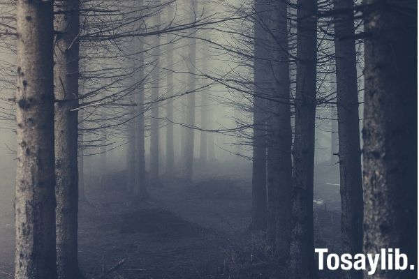 trees surrounded with fogs photo