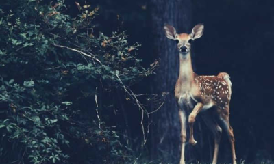 brown-deer-beside-plant-words-to-describe-forest