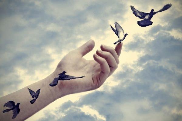 illustration bird tattoos come life